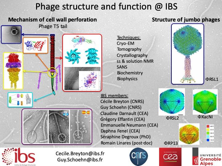 Représentation de la queue d'un phage, perforation, cryo-EM, tomography, cristallography, NMR, jumbo phages