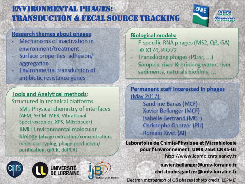 MS2, QB, GA, transduction, eau Environnementale, biofilm, aggregation, adhésion, ARG