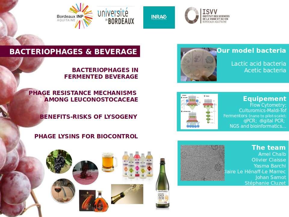 mécanismes de résistances, Leuconostoc, lysogénie, vin, fermentation malo-lactique