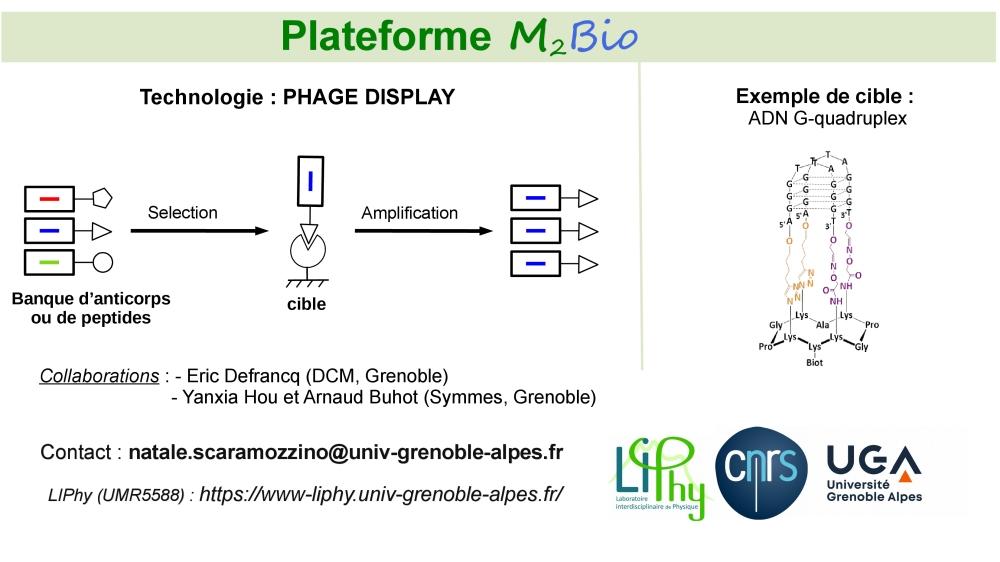 Représentation schématique de la méthode phage display [décrire la photo]