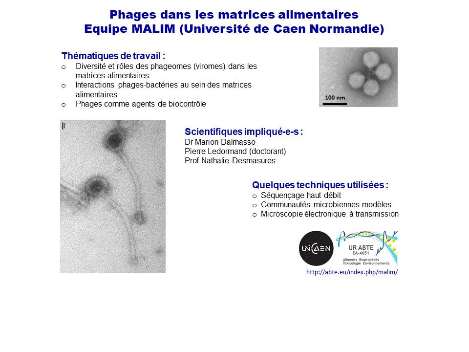Phages de l'équipe MALIM